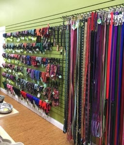 Pet leashes and collars at Your Healthy Pet